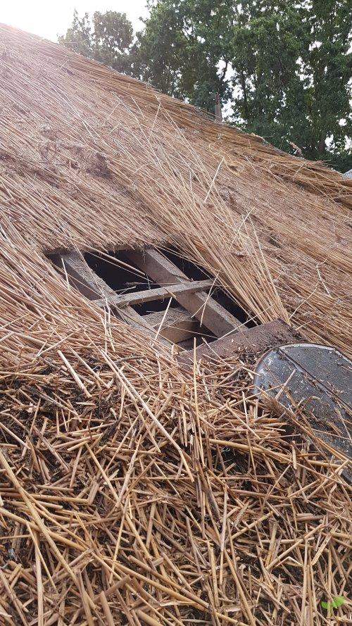 Rieten dak laten repareren / renoveren